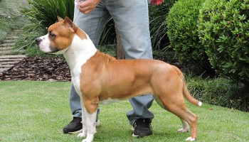 Highlight Our Dogs: Rainbow Fire Fraja Ticket To Victory - Lola