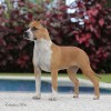 Highlight Our Dogs: Rainbow fire Fraja Ticket To Heaven - Lara