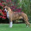 Destaque Nossos Cães: Rainbow Fire Fraja Express Ticket - Spice