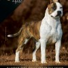 Galeria de Imagens Mídia: Capa Cães de Fato